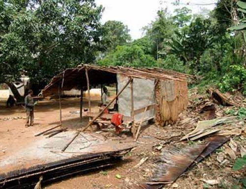 Building Baka houses at Gbiné